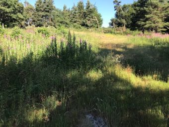 Joli terrain constructible viabilisé de 1600 m²
